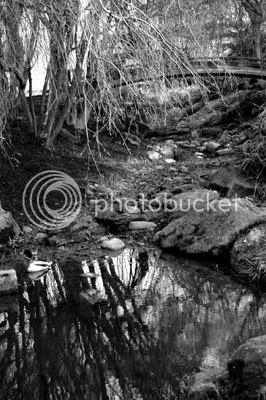 Tranquil Pond (black & white)