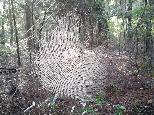 Spiderweb in the morning | Canopy Roads of South Georgia