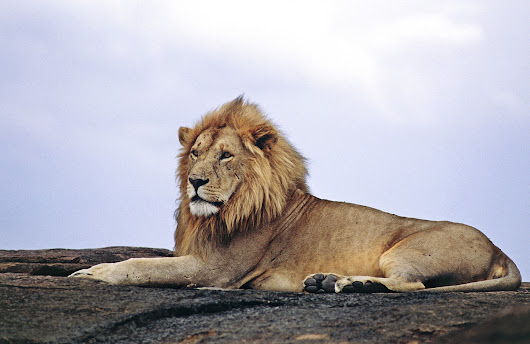 Is this Cecil's legacy? What you can do to protect the lions, elephants and rhinos in Africa