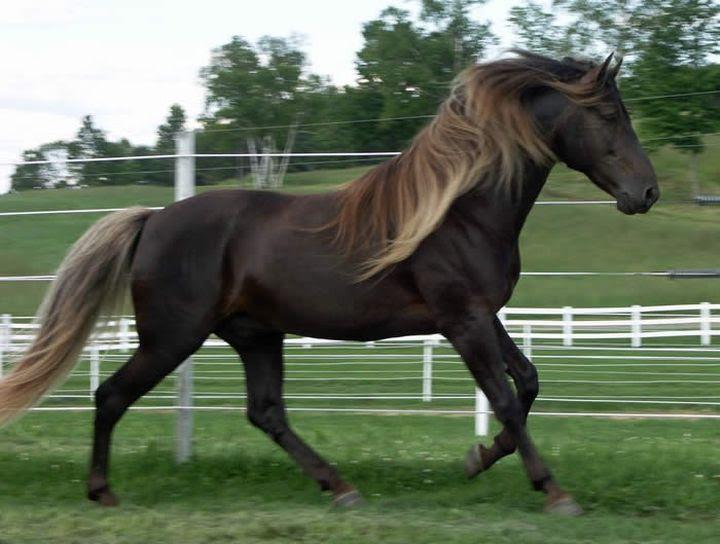 Igrenevaya animal horse
