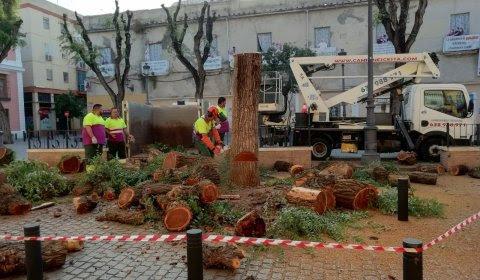 Trabajadores del Ayuntamiento de Sevilla cortan un árbol. RICARDO GAMAZA