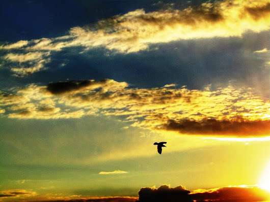 Colorful Sky With Flying Bird