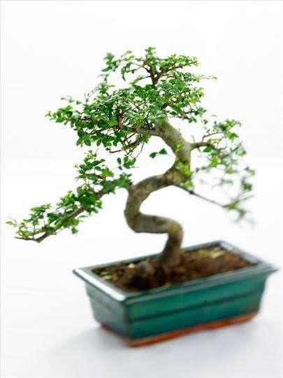 Ağaçlar Axipixde Ağaç Gövdesi Boyama Sayfası 10