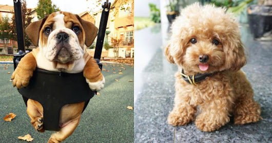17 Cute Pictures of Puppies That You Need to See