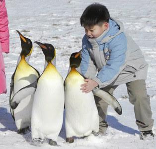 Un niño juega con pingüinos en un zoo de Corea del Sur.