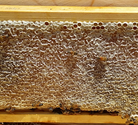 Honey Extraction Service