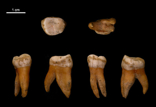 The DNA sequencing of 5 Neanderthals brings new data on the final phase of their history