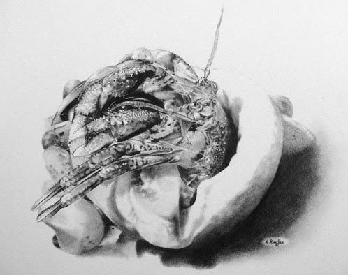 Hermit crab original charcoal drawing | Charcoal Drawing | North Yorkshire | Drawing In Dark
