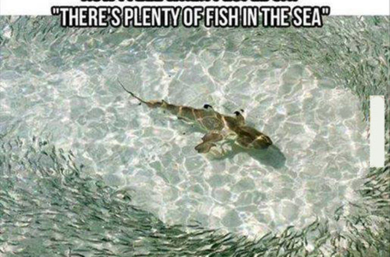Plenty Of Fish Funny Pictures Quotes Memes Funny Images Funny