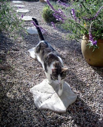 Felix the cat makes a visit