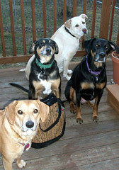 4Dogs_TBihnBag_31710