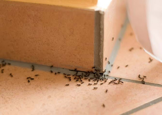 What Happens to Pests During the Winter?
