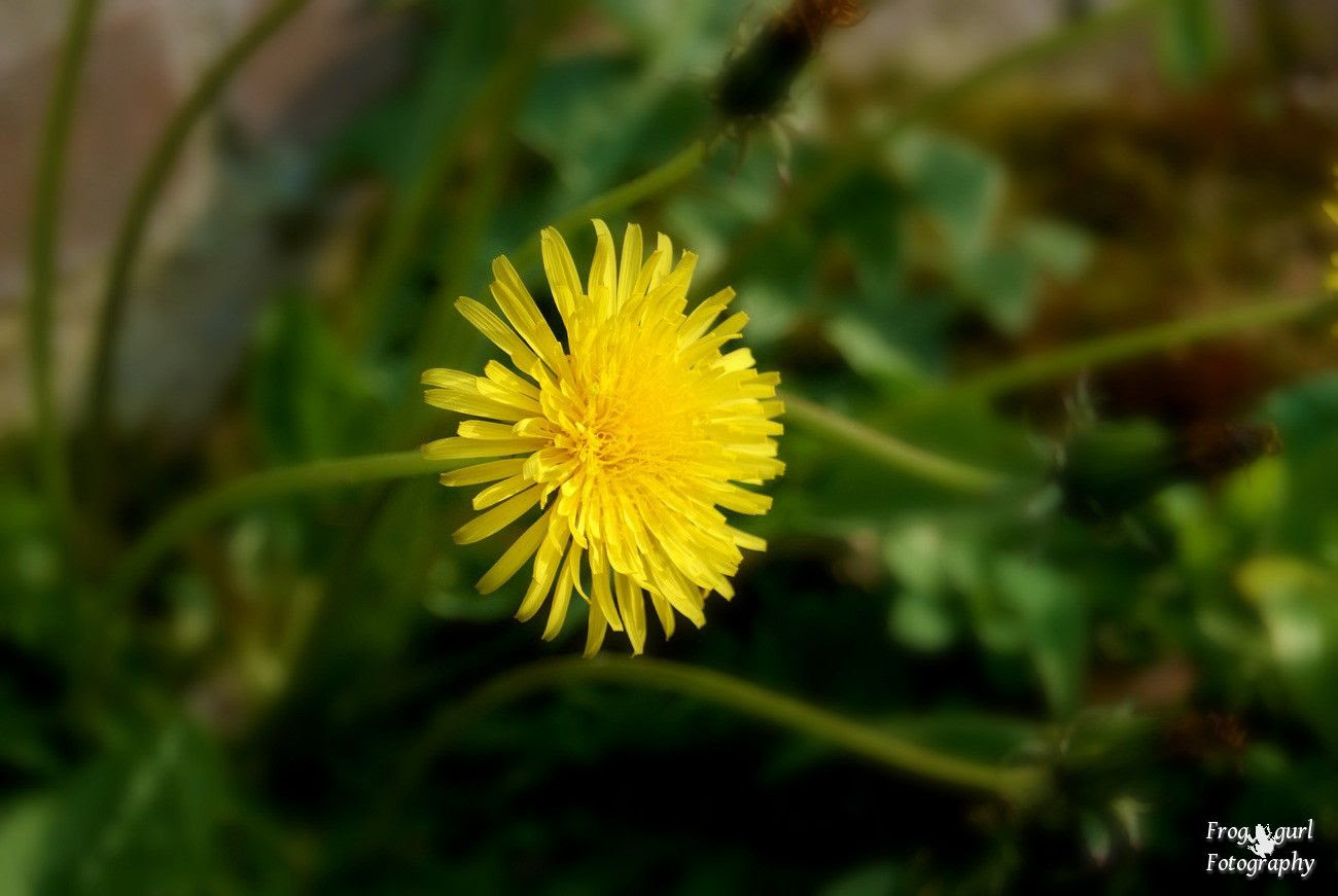 8.5, I love the deep yellow color of a dandelion.