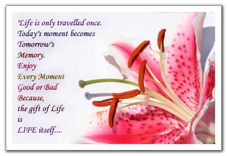 Quotes About Cards And Life 78 Quotes