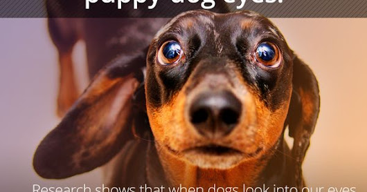 The Power Of Puppy-Dog Eyes Explained By Science from ...