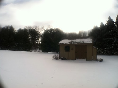 winter in the back yard