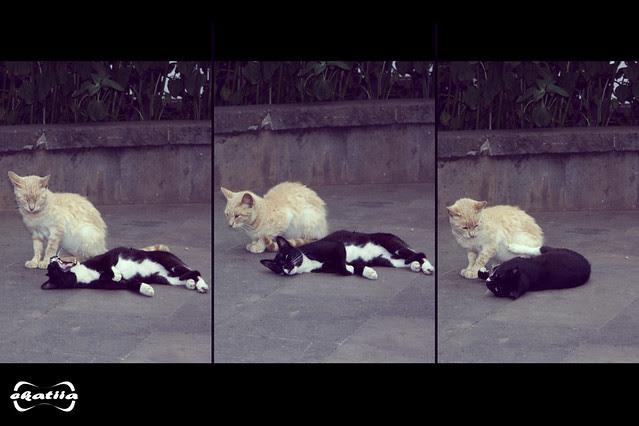 Sesión: Gatos Abandonados