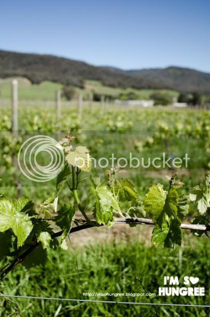 photo 1-pizzini-wines-1554_zps69ed5b1a.jpg