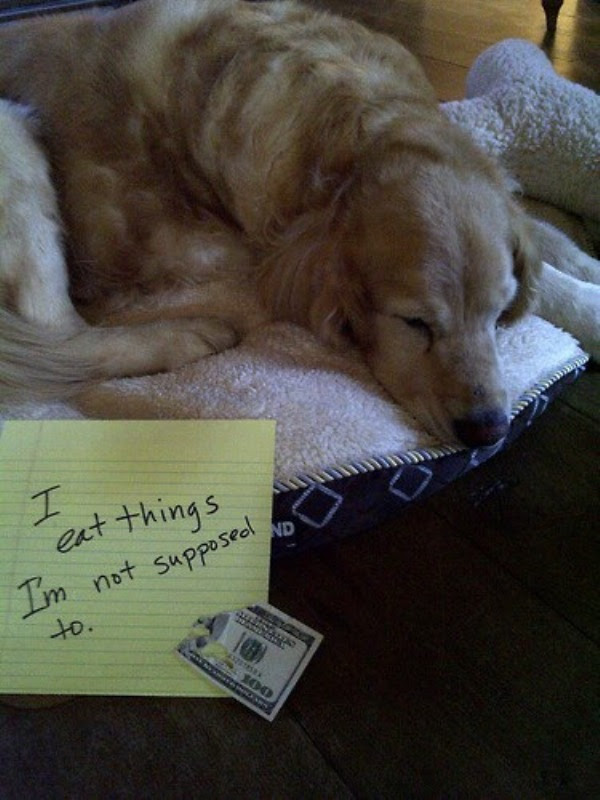 guilty-dogs-27
