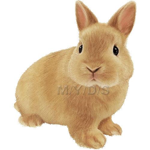 ネザーランド ドワーフ兔ウサギのイラスト条件付フリー素材集