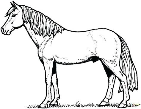 mustang horse coloring pages printable  getcoloringscom