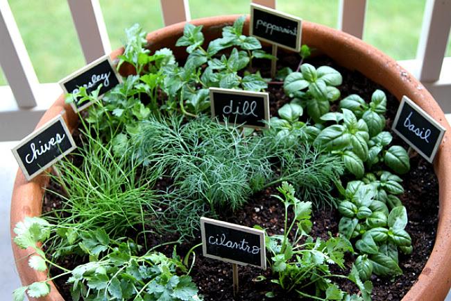 one pot garden