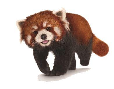 red panda png hd hq png image freepngimg