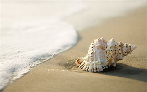 Free Sand Live Images, HD Wallpapers   BsnSCB