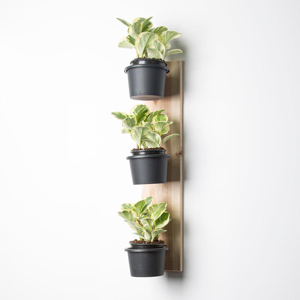 Wall Mount Ring Plant Pot Holder With 5 Black Pockets Set Of 3 Higo Technologies