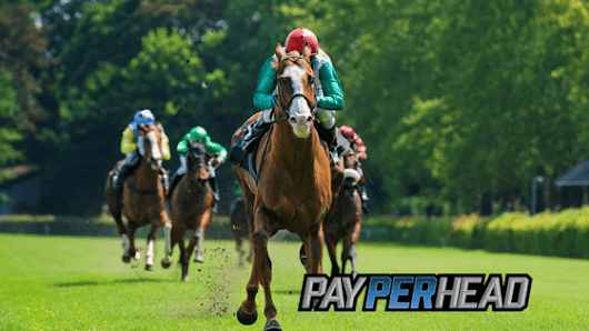 Horse Betting 101: Online Racebook Tools You Need During The Races