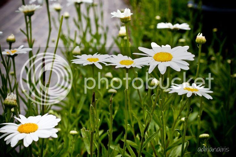photo flowers_zpsfa15db4c.jpg