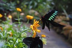 At the Butterfly Garden, Cameron Highlands, Malaysia by Joe Gratz