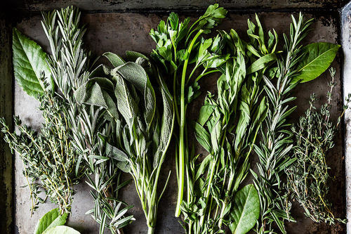 Preserving Your Herbs with an Ice Cube Tray and Olive Oil