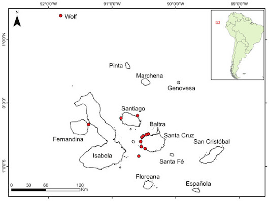 Improved estimates of age, growth and reproduction for the regionally endemic Galapagos sailfin grouper Mycteroperca olfax (Jenyns, 1840)