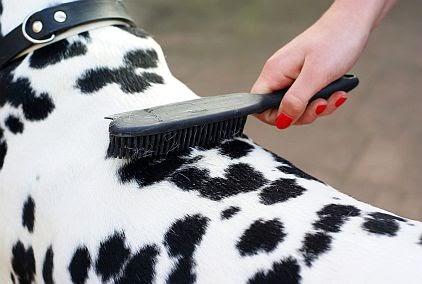 A escovação no seu cachorro