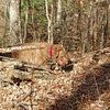 Lot's of downed timber