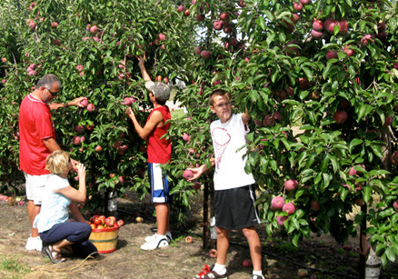 Apple Orchard - Pumpkin Patch & Apple Picking in New Haven IN | Advanced Tree Technology