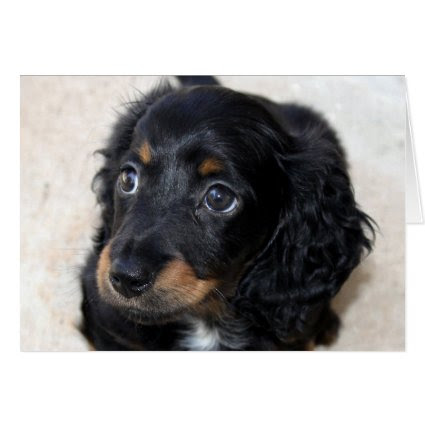 Dachshund puppy dog cute photo birthday card
