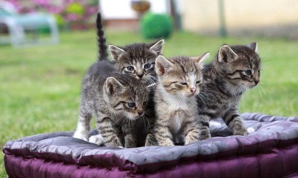 ¿Qué se necesita para adoptar un gato?