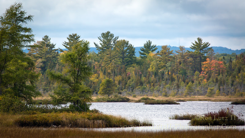 Big, Bay, State, Park, lagoon, boreal, fall, natural, nature, Madeline, Island, forest