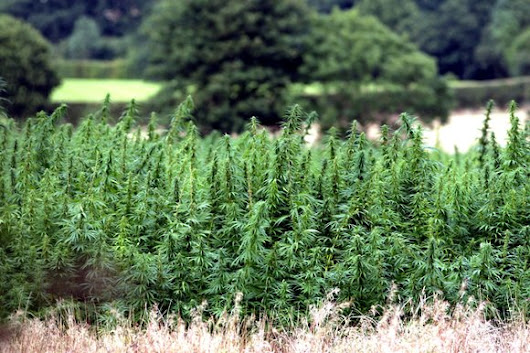 A Brief History of Hemp in the UK
