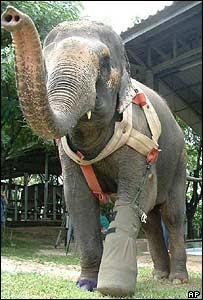 Motala wears her prosthetic limb at the elephant hospital in Lampang Province, Northern Thailand