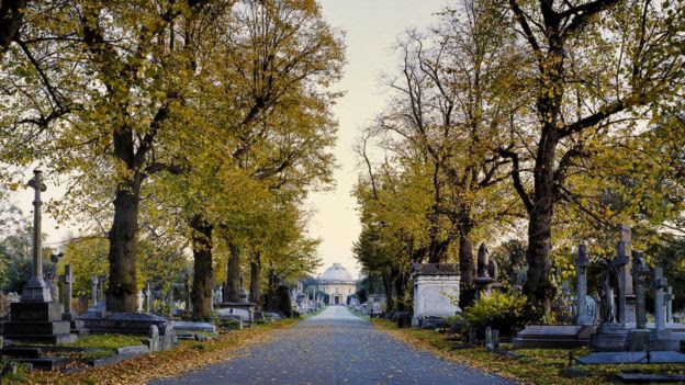 View of Brompton Cemetery in Autumn
