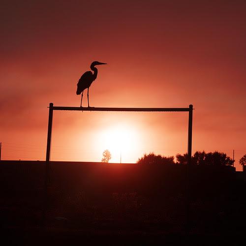 heron_sunrise