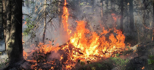 Wildfire Season in BC, One More Long Weekend to Go | Ashika Parsad