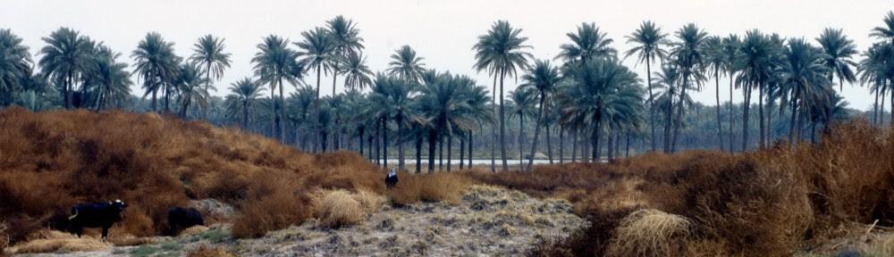 http://sepoa.fr/wp/wp-content/uploads/2012/05/cropped-Babylone-palmeraie1.jpg