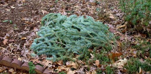 How to Recycle a Christmas Tree | Today's Homeowner