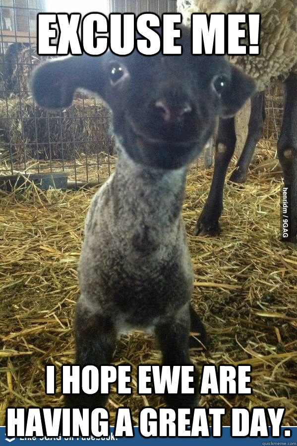 Excuse Me I Hope Ewe Are Having A Great Day Encouraging Pun Lamb
