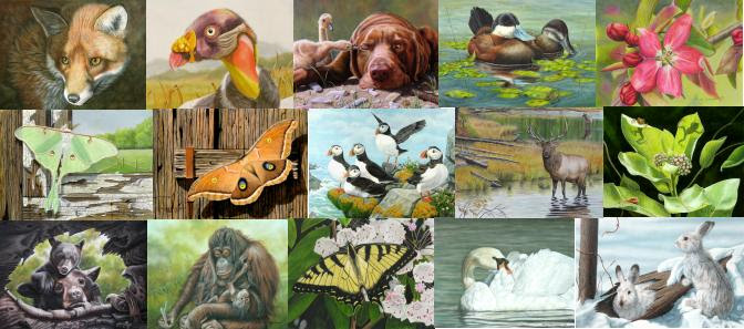Wildlife Paintings, Miniature Art and Nature Art.