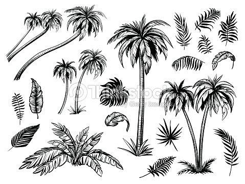 ヤシの木と葉黒いラインのシルエットベクター スケッチ イラスト